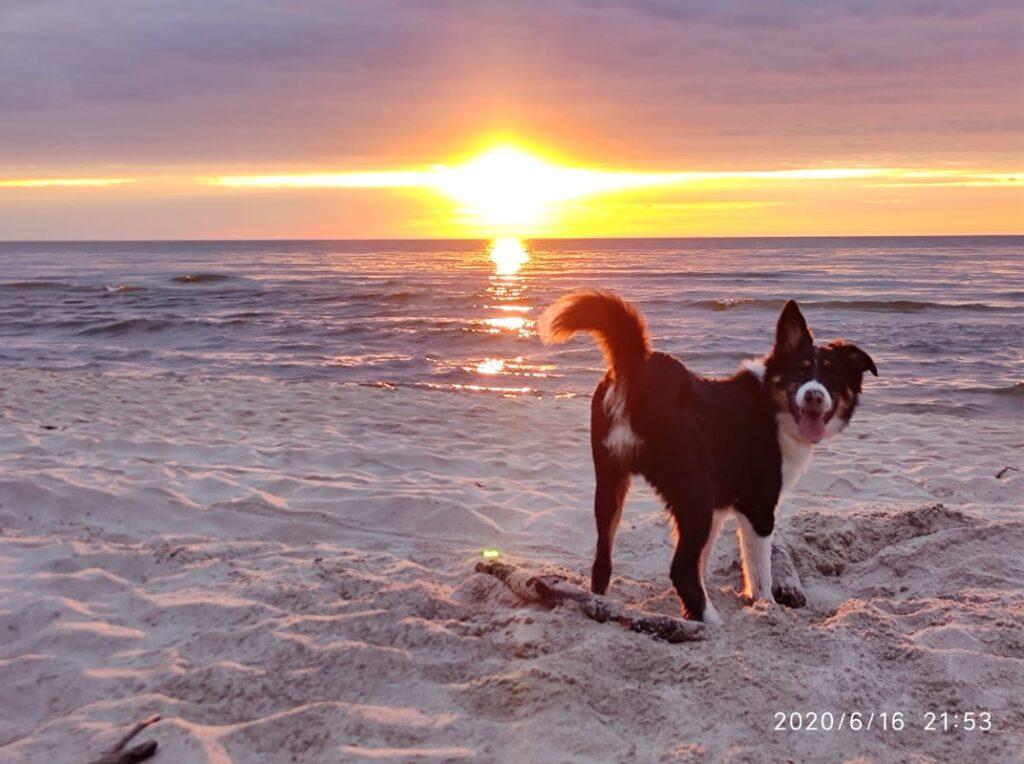 Nad morzem z psem